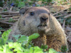 2021: Groundhog Day